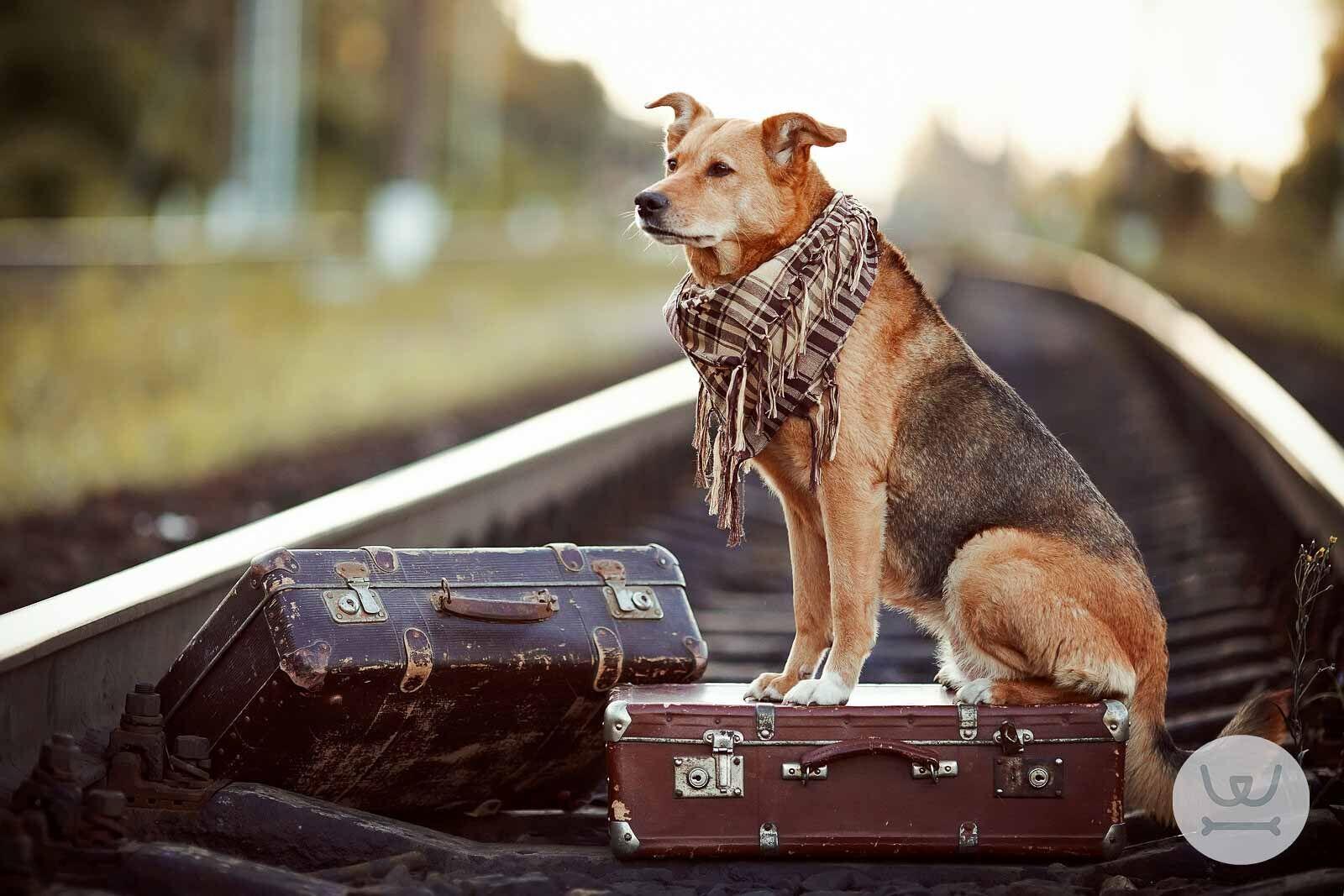 4b3a27349519 Woofland - Άρθρα - Σκύλος μετακίνηση και μέσα μεταφοράς.