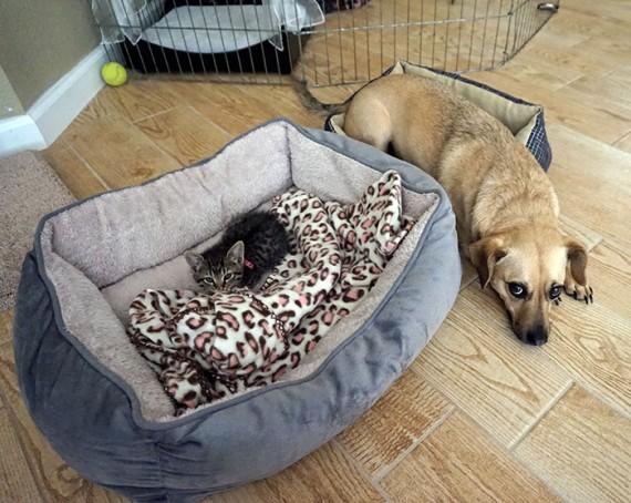 d3d4502a064a Woofland Γουφαμάρες Σκύλος και γάτα Η γάτα πήρε το κρεβάτι μου 7