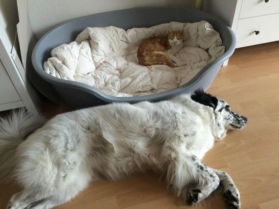 cffec7bd6d60 Woofland - Γουφαμάρες - Σκύλος και γάτα - Η γάτα πήρε το κρεβάτι μου