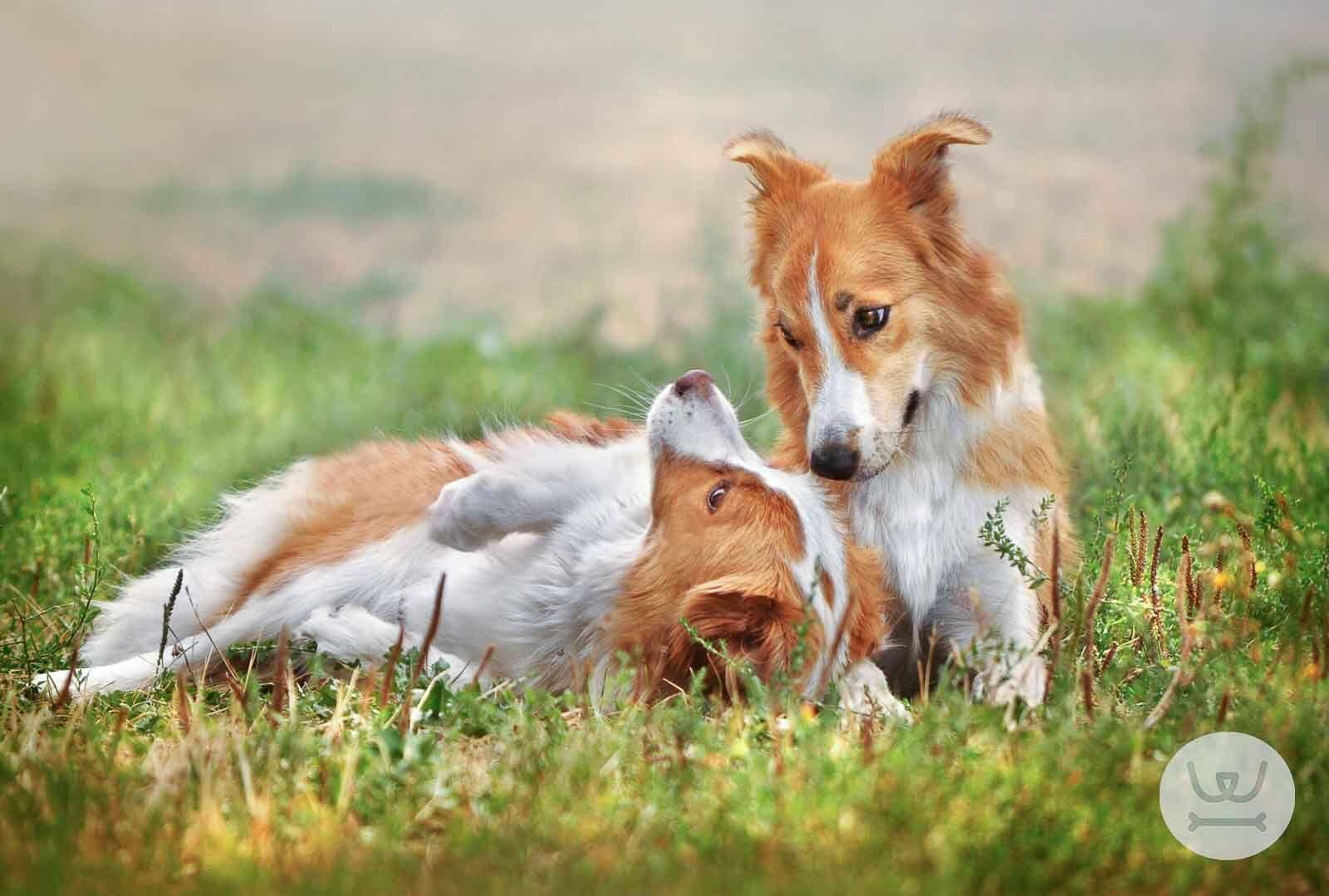 8dbb3635b6fe Woofland - Τι συμβαίνει με τα σκυλιά στην Ελλάδα 1ο - Άνθρωπος και σκύλος