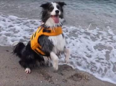 Βίντεο: Πως πλένω – κάνω μπάνιο τον σκύλο μου