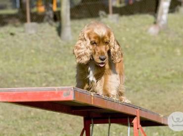 Καθημερινές συμβουλές για τον σκύλο μου – Εκπαίδευση σκύλου 9ο