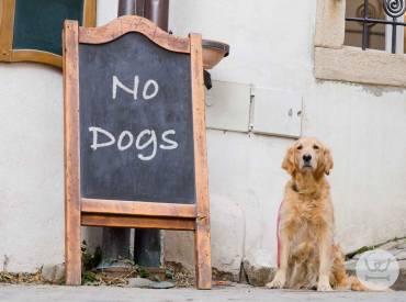 Καθημερινές Συμβουλές για τον σκύλο μου 7ο