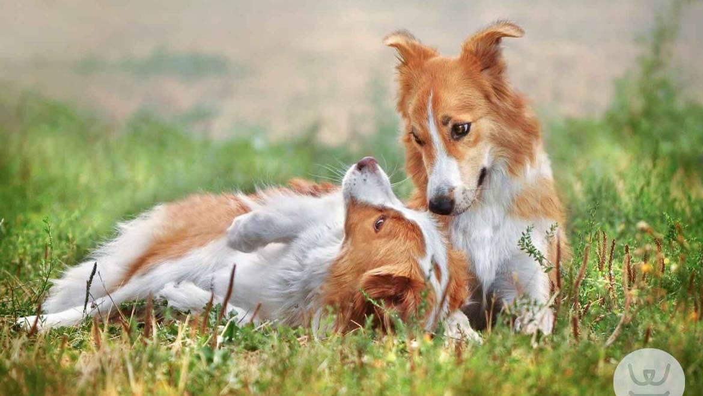 Η γλώσσα των σκύλων. Σήματα ηρεμίας. Εκπαίδευση σκύλου