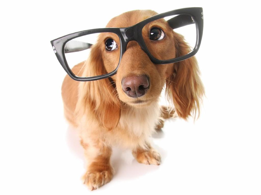 Ζουν περισσότερο οι έξυπνοι σκύλοι; – Επιστήμη και ενημέρωση