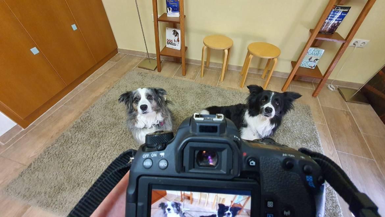 Βίντεο: Πως να φωτογραφίσω τον σκύλο μου