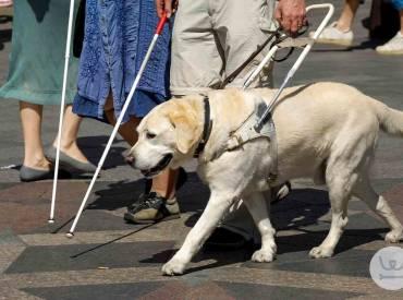 Σκύλοι Βοηθοί και Σκύλοι Εργασίας – Εισαγωγή στην κατηγορία