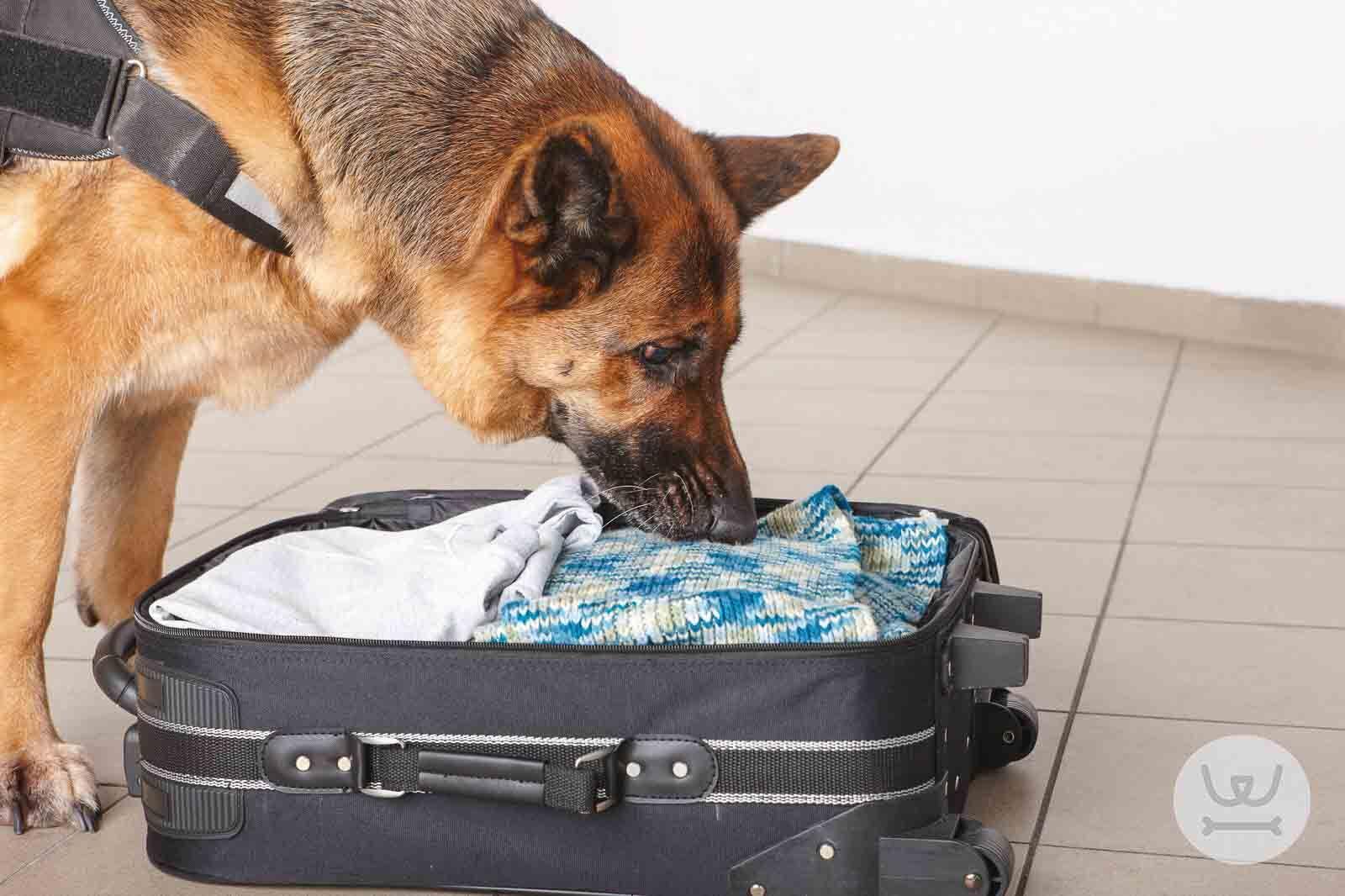 Woofland - σκύλοι βοηθοί και σκύλοι εργασίας
