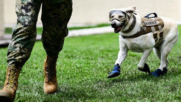 Woofland - Φρίντα Σκύλος διασώστης συνταξιοδοτείται - Σκύλοι βοηθοί και εργασίας