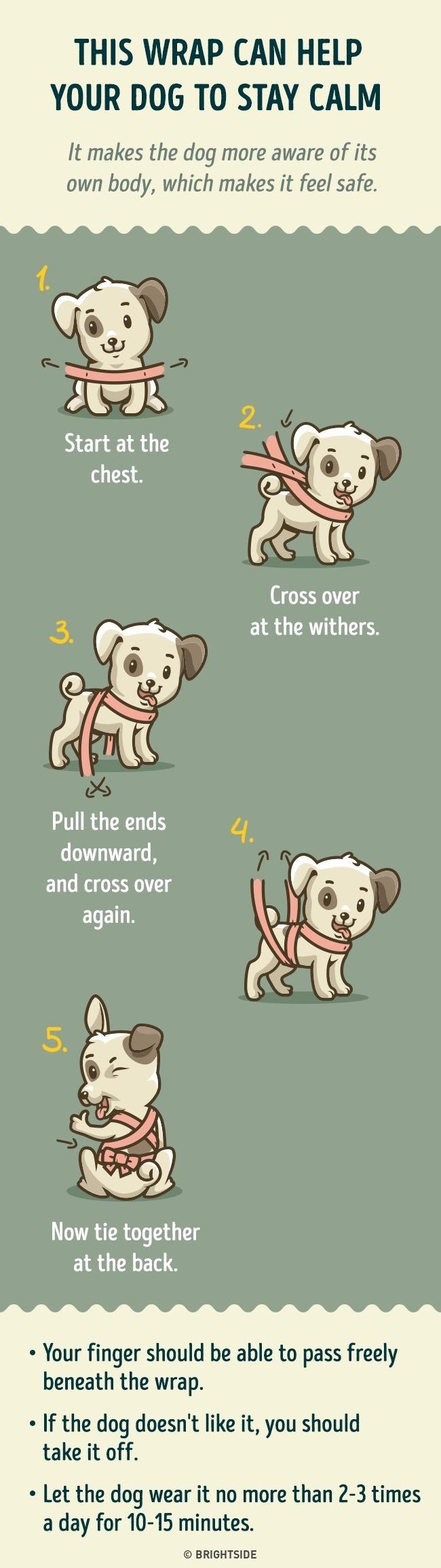 Woofland - Πως διατηρώ το σκύλο μου ήρεμο σε έντονους θορύβους - Επιστήμη και ενημέρωση