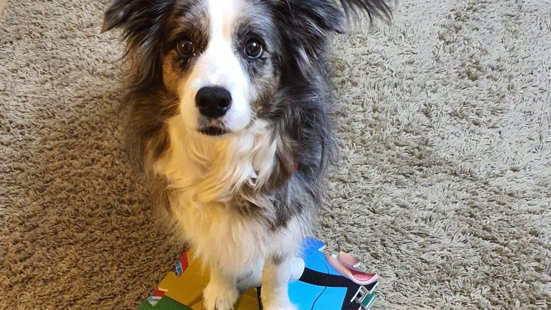 Βίντεο: Εκπαιδεύουμε τον σκύλο μας να στοχεύει αντικείμενα