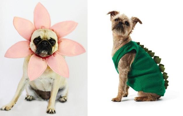 DIY Αποκριάτικες στολές για σκύλους – Woofland