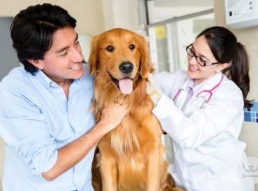 Καθημερινές συμβουλές 10ο – Ποιον κτηνίατρο θα διάλεγε ο σκύλος σας