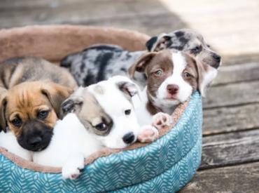 Σχέδιο Νόμου Δεσποζόμενων και Αδέσποτων Ζώων Συντροφιάς