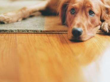 Γιατί ο σκύλος μου ξύνει τα πατώματα;
