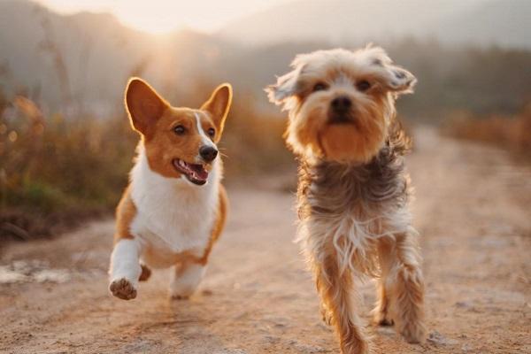 Πόνος στις αρθρώσεις του σκύλου και υπερδιέγερση
