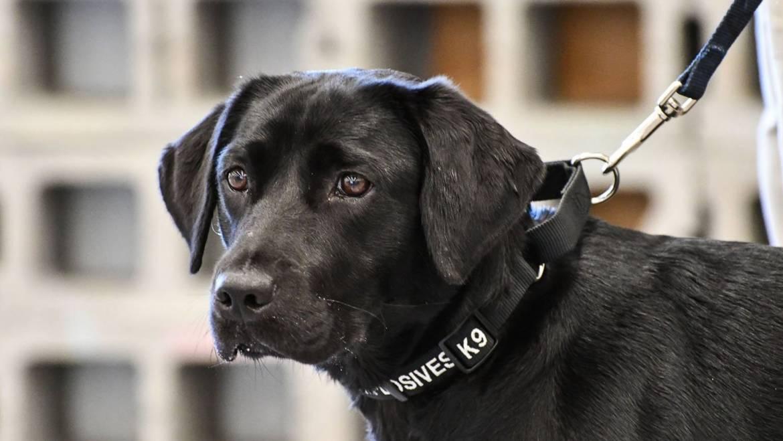 Σκύλος αποβάλλεται από τάξη της CIAγιατί ήταν πολύ φιλικός