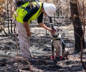 Σκύλοι βοηθοί και εργασίας