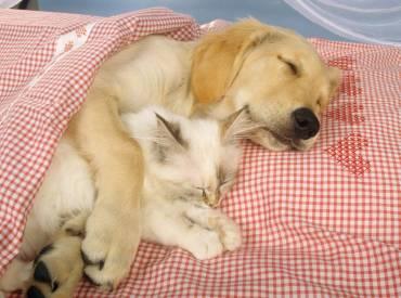 10+1 φωτο από σκύλους και γάτες που κοιμούνται μαζί