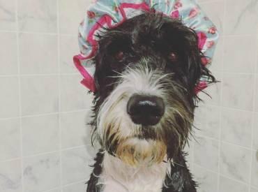 Γουφαμάρες – Αστείες φωτογραφίες σκύλων μετά το μπάνιο