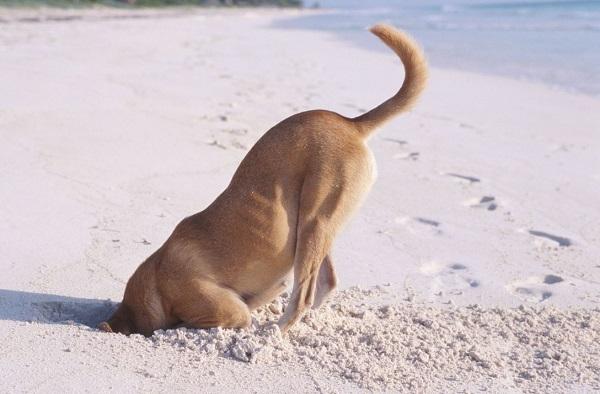 Woofland - Αστείες φωτογραφίες σκύλων που σκάβουν - Γουφαμάρες 1
