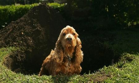 Woofland - Αστείες φωτογραφίες σκύλων που σκάβουν - Γουφαμάρες 2