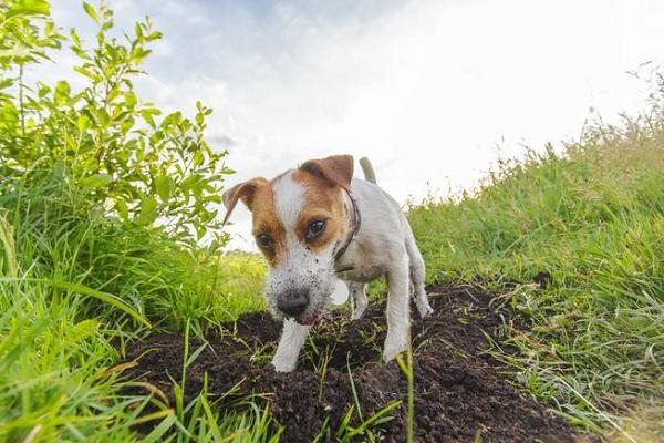 Woofland - Αστείες φωτογραφίες σκύλων που σκάβουν - Γουφαμάρες 3