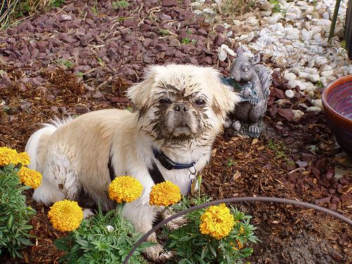 Woofland - Αστείες φωτογραφίες σκύλων που σκάβουν - Γουφαμάρες 7