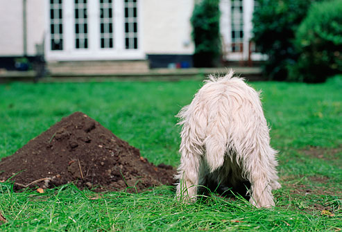 Woofland - Αστείες φωτογραφίες σκύλων που σκάβουν - Γουφαμάρες 8