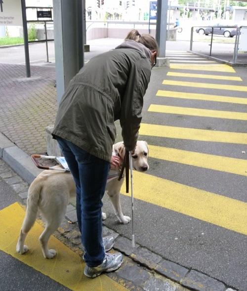 Woofland - σχολή σκύλων οδηγών Λάρα