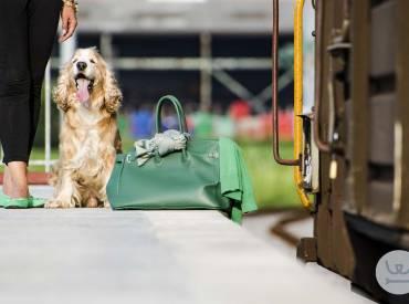 Καθημερινές συμβουλές για τον σκύλο μου και Μέσα μαζικής μεταφοράς