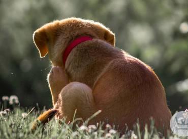 Καθημερινές συμβουλές για τον σκύλο μου – Παράσιτα στον σκύλο