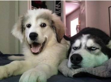 14+1 αστείες σκύλο φωτογραφίες