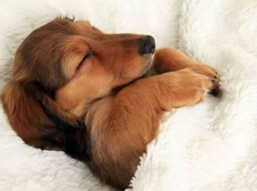 """10+1 σκυλάκια που """"τρύπωσαν"""" στο κρεβάτι μας"""