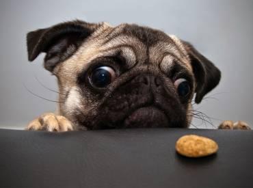 Σκύλος και διατροφή – Αστείες φωτογραφίες σκύλων Γουφαμάρες