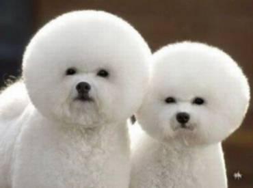 Σκύλος και κούρεμα – Αστείες φωτογραφίες σκύλων Γουφαμάρες