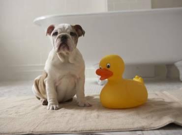 Σκύλος και μπάνιο – Αστείες φωτογραφίες σκύλων