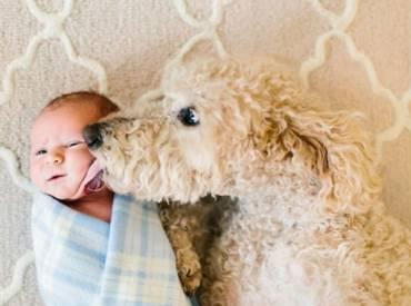 Σκύλος και παιδιά – Αστείες φωτογραφίες σκύλων