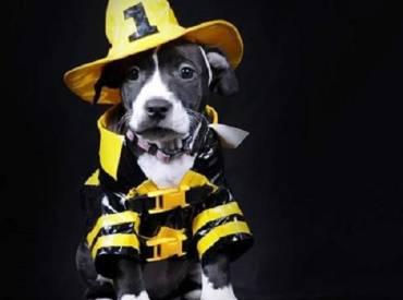 Σκύλος με στολή – Αστείες φωτογραφίες σκύλων