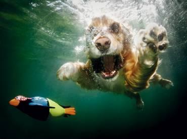 12+1 Σκυλοβουτιές! Σκυλιά στην θάλασσα!