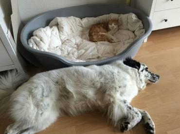 Γουφαμάρες – Σκύλος και γάτα – Η γάτα πήρε το κρεβάτι μου