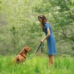 Woofland -Επιβράβευση και διόρθωση στην εκπαίδευση σκύλου