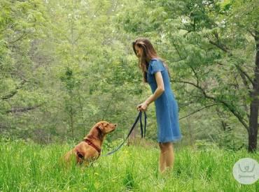 Επιβράβευση και διόρθωση στην εκπαίδευση σκύλου