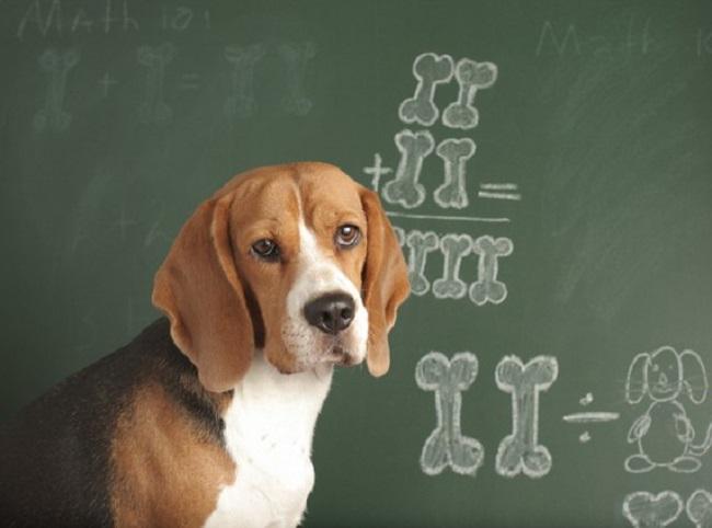 Woofland -Επιστήμη και ενημέρωση - Μου μοιάζει ο σκύλος μου