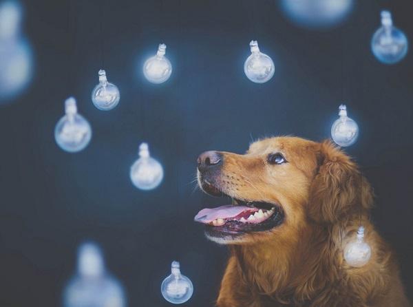 Πόσοι σκύλοι χρειάζονται για να αλλάξουν μια λάμπα Woofland
