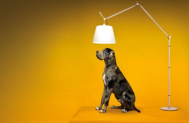 Woofland -Πόσοι σκύλοι χρειάζονται για να αλλάξουν μια λάμπα - Γουφαμάρες