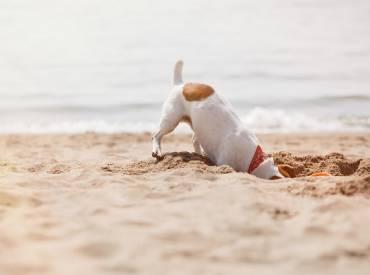 Συμβουλές για διακοπές με το σκύλο μου – Φροντίδα και υγεία