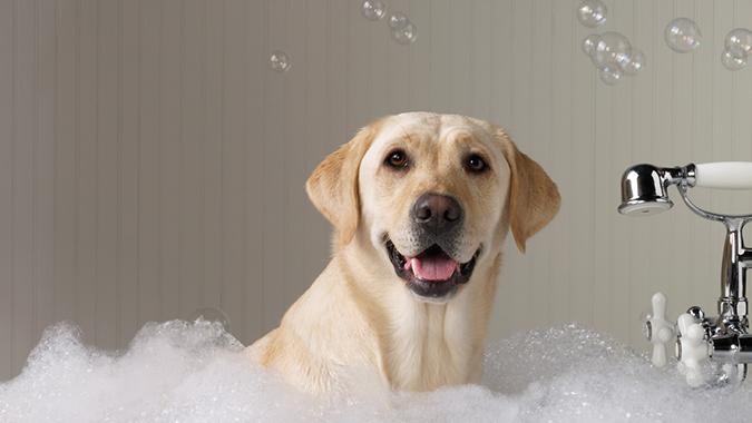 Woofland -Συνταγή σαμπουάν για σκύλους - Φροντίδα και υγεία σκύλων