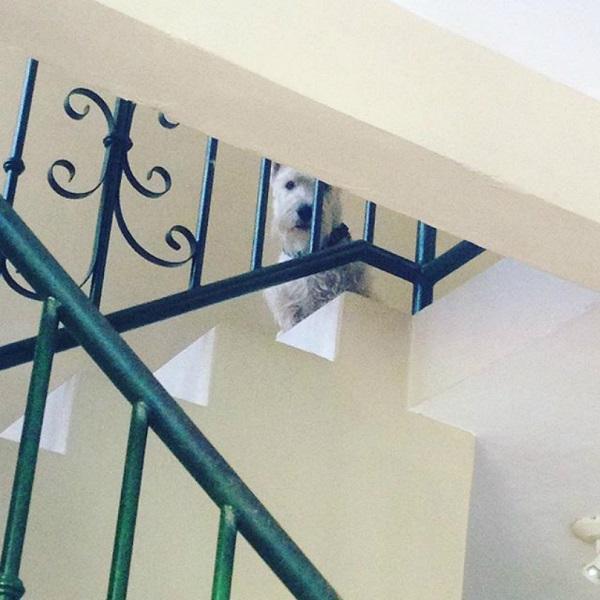 Woofland - Όταν ο σκύλος γίνεται η σκιά μου Αστείες φωτογραφίες σκύλων - Γουφαμάρες 10