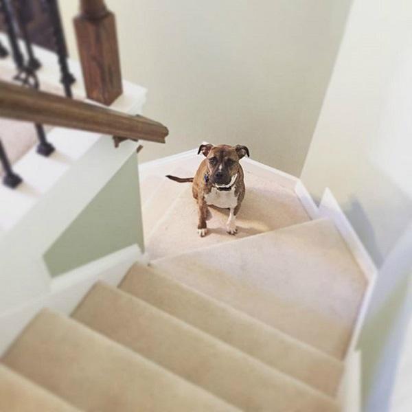 Woofland - Όταν ο σκύλος γίνεται η σκιά μου Αστείες φωτογραφίες σκύλων - Γουφαμάρες 11